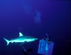 Peinture en immersion de Malvina à Rangiroa dans la grotte aux requins photo de Pozzoli