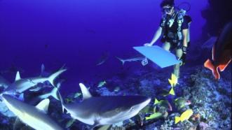 Séance de peinture avec les requins à Rangiroa