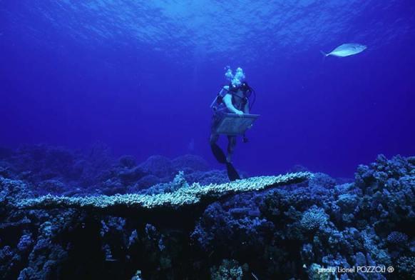 Peinure en imersion de Malvina, sur les coraux, Photo de Pozzoli