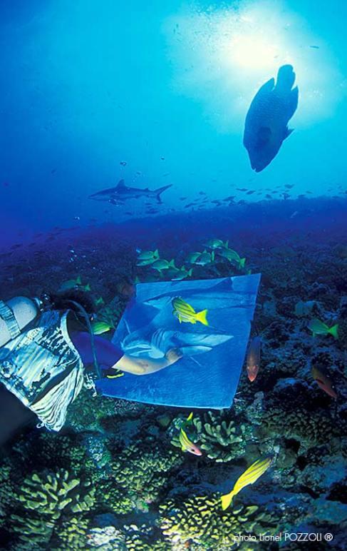 Peinture en immersion par Malvina au milieu des poissons Napoléon Photo de Pozzoli