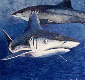Portrait de Requins, peinture en immersion par Malvina