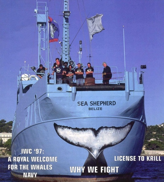 La première queue de la Baleine de Malvina sur le Sea Shepherd