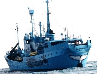 Le Sea Sherpherd III navigue sur les flots.