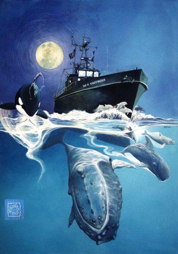 baleine 72