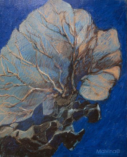 Gorgone peinte sous la Mer Rouge