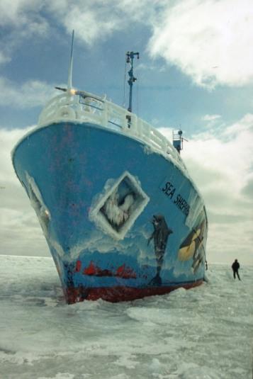 Sea Shepherd sur la banquise